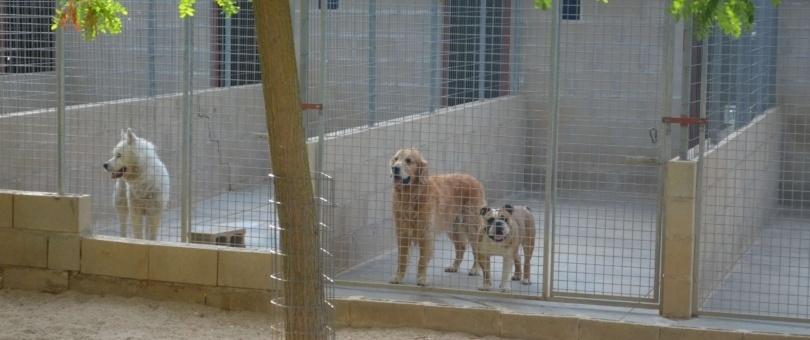Guardería canina en Madrid