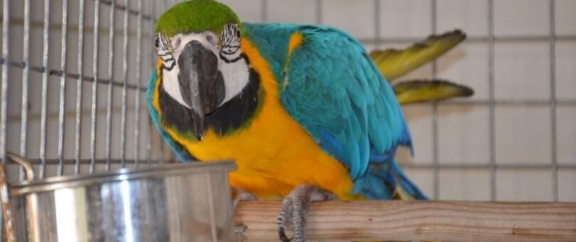 residencia aves madrid