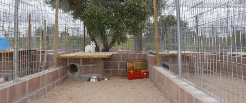 residencia conejos madrid