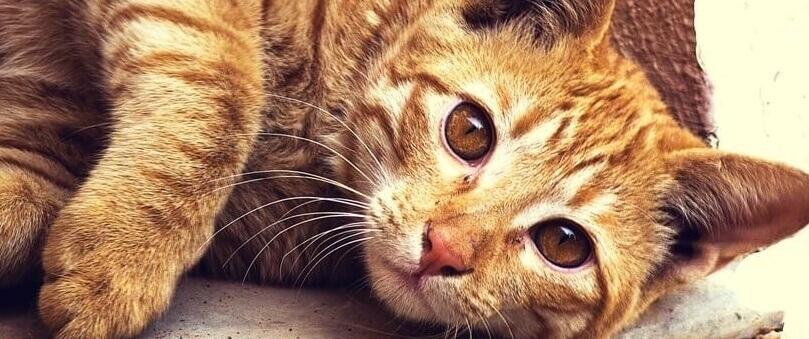 adiestrar a tu gato