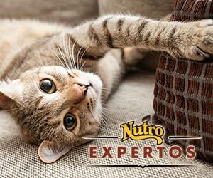 gato arañando sofá
