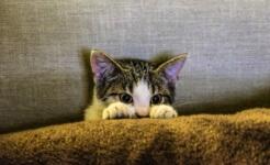 evitar gato arañe sofá