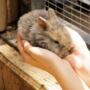 residencia para roedores