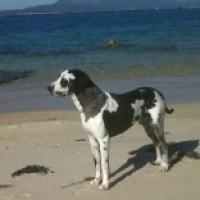 Foto del perfil de zorbachiapas