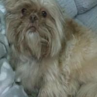 Foto del perfil de leoncio