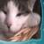 Foto del perfil de flamboyan