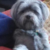 Foto del perfil de osito