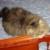 Foto del perfil de laura35