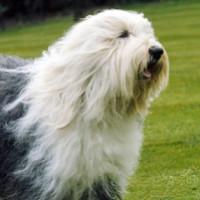 Foto del perfil de victor