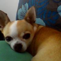 Foto del perfil de marygarlic
