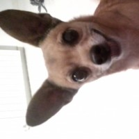 Imagen de la mascota Danko