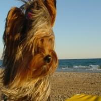 Imagen de la mascota Minnie Joli