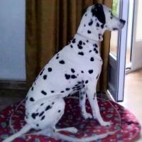 Imagen de la mascota Bilma