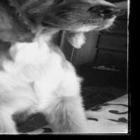 Imagen de la mascota Stella