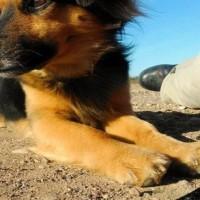 Imagen de la mascota Kovu
