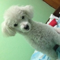 Imagen de la mascota Gordo