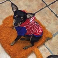 Imagen de la mascota Pincho