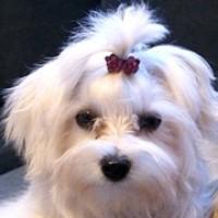 Imagen de la mascota Lara