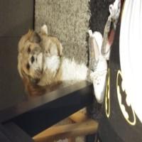 Imagen de la mascota Trufa