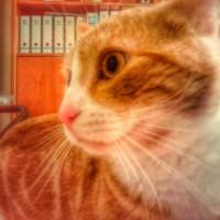 Imagen de la mascota pablito