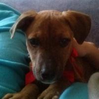Imagen de la mascota Laika