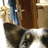 Imagen de la mascota Coco