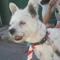 Imagen de la mascota Messi