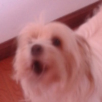 Imagen de la mascota GALA
