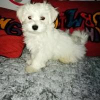 Imagen de la mascota Txingurri