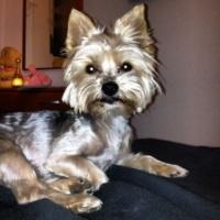 Imagen de la mascota Nika