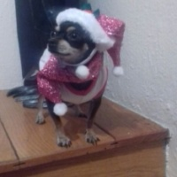 Imagen de la mascota Lola