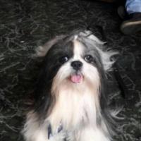 Imagen de la mascota Doki