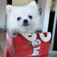 Imagen de la mascota thomas