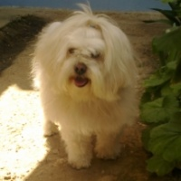 Imagen de la mascota Peluchín