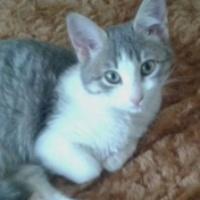 Foto de la mascota