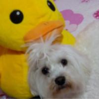 Imagen de la mascota Nora