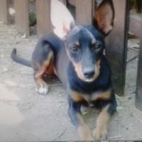 Imagen de la mascota MARINA