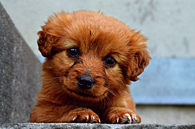 Nombres para perros machos - webanimales.com